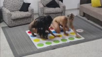 Elas brincaram de Twister peladinhas!